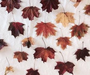 autumn, leaf, and seasonal image