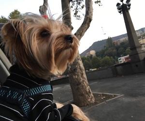 clothes, dog, and Georgia image