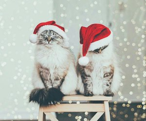 cats, christmas, and winter image