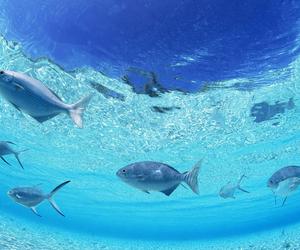 aquarium, sea, and wolf image