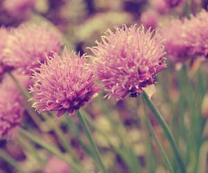 amazing, flowers, and photo image