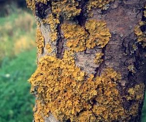 Poland, forrest, and fungi image