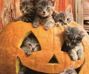 cat, Halloween, and kittens image