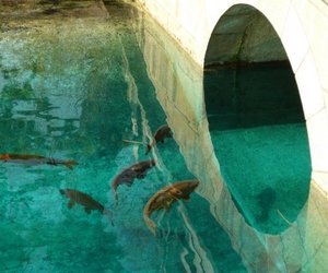 dolphin, sea, and animals image