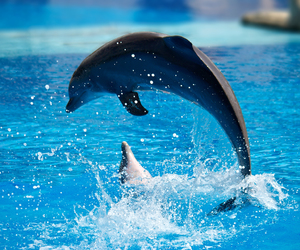 animals, cute animals, and dolphin image