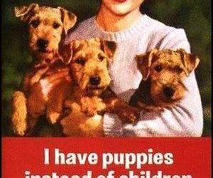 funny, puppy, and dog image