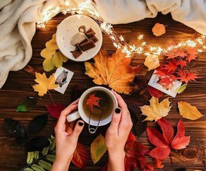 autumn, colors, and drinking image