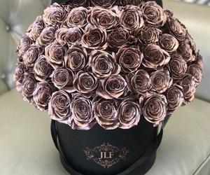 roses, beautiful, and black image