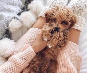 sweet, love, and dog image
