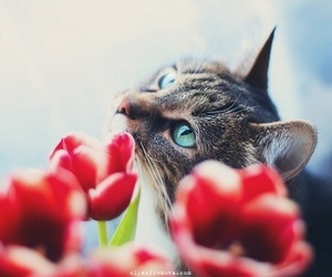 blue eyes, flower, and cat image