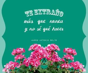 flores, verde, and español image
