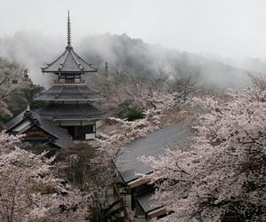Image by okamistella