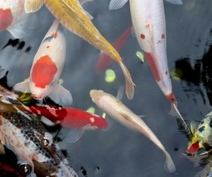 theme and fish image