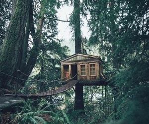 home and tree house image