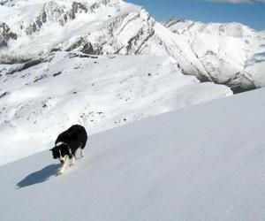 border collie, mountain, and snow image