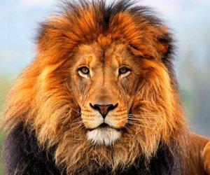 africa, animal, and beautiful image