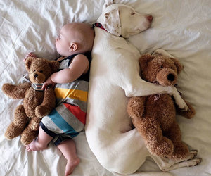 babies, dogs, and cute image