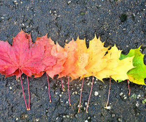 colors, fall, and nature image