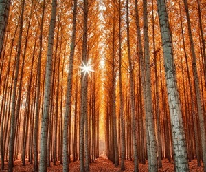 beauty, fall, and nature image