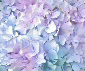 flowers, purple, and pastel image