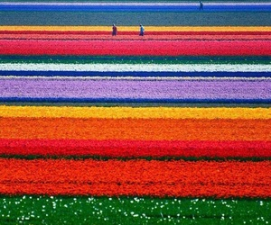 colours, holland, and nature image