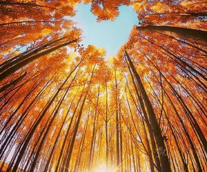 autumn and heart image