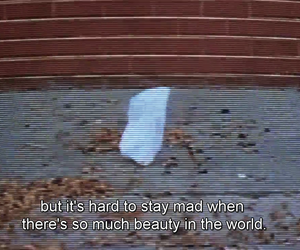 quotes, american beauty, and beauty image
