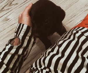 justin bieber, dog, and puppy image