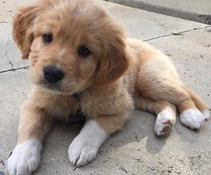 animal, baby animal, and dog image