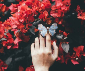 butterfly, flowers, and red image