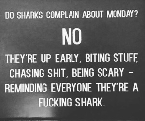 motivation, shark, and monday image
