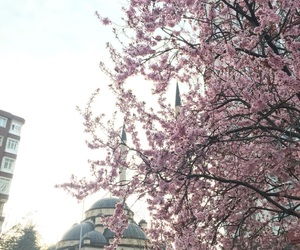 flowers, mosque, and pink image