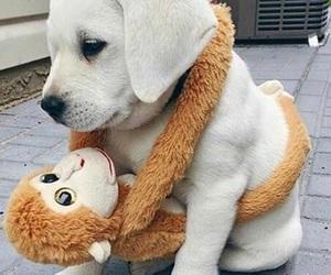 baby animal, dog, and pet image