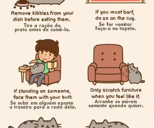 cat, etiquette, and funny image