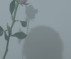 blue, rosas, and rose image