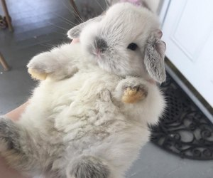 beautiful, downy, and bunny image