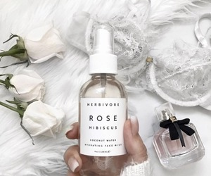 rose, white, and beauty image