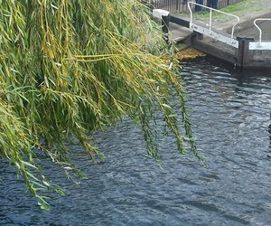 camden town, nature, and water image