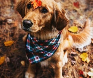 dog, fall, and cute image