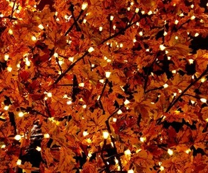 amazing, autumn, and brown image