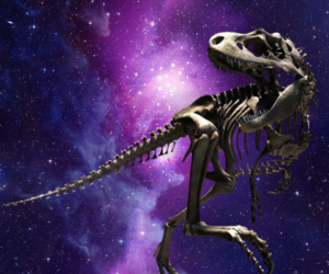 bones, dinosaur, and skeleton image