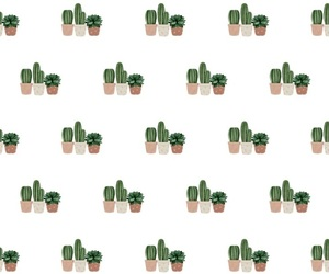 background, cactus, and flores image