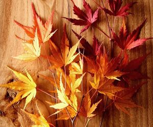 autumn, Dry Leaves, and fall image