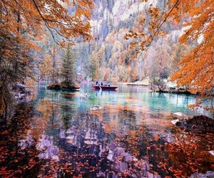 nature, colors, and forest image