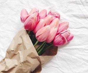 розовый, тюльпаны, and цветы image