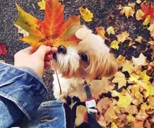 animal, autumn, and puppy image