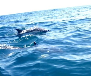 algarve, nature, and dolphins image