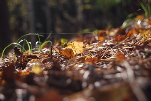 article and autumn nature image