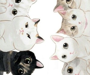 background, full, and cats image