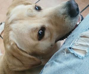 :3, animals, and dog image